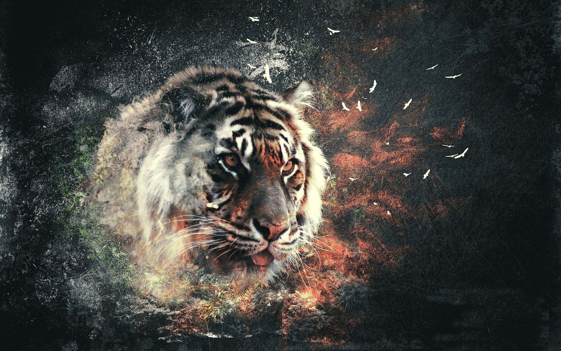Tiger Wallpaper 3d Hd Resolution Free Download Tiger Wallpaper