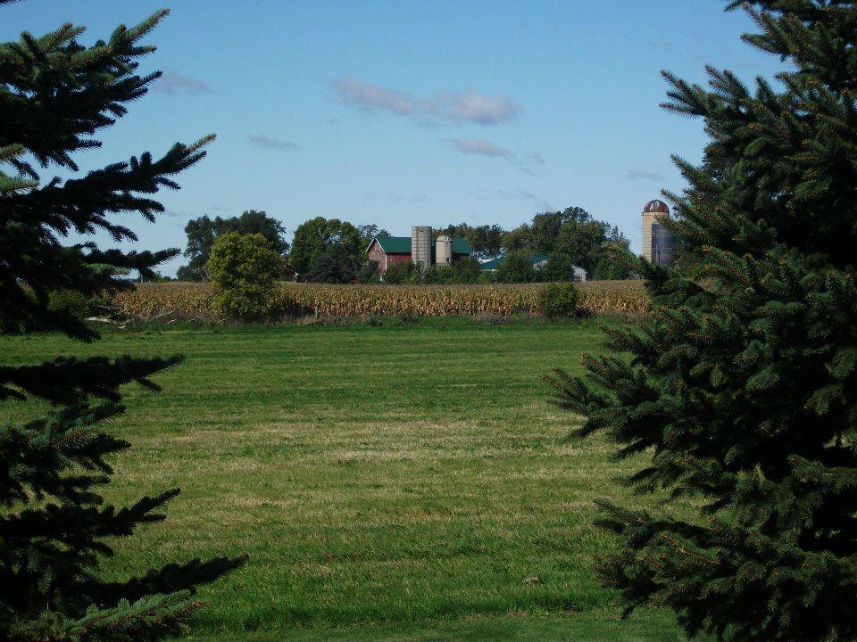 Farm framed by trees.