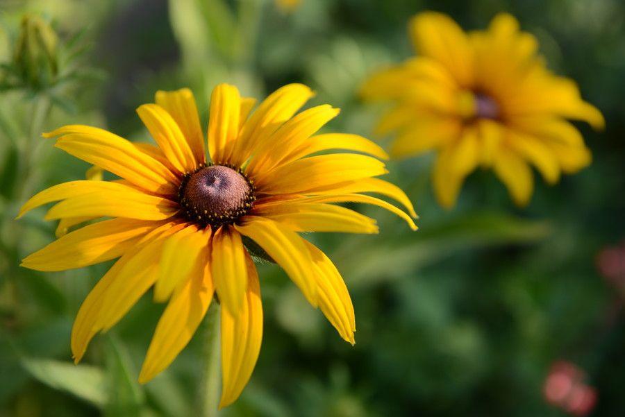 Fiori Gialli Bosco.Yellow Ones By Janos Guljas On 500px Con Immagini Fiori