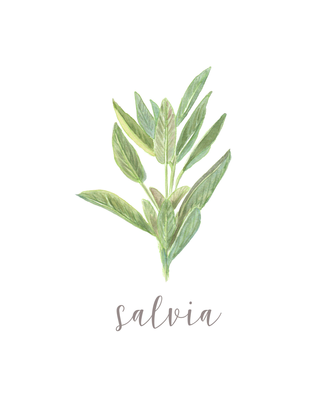 Salvia Herbs Spices Watercolor Farmhouse Printable Wall Art Poster ...