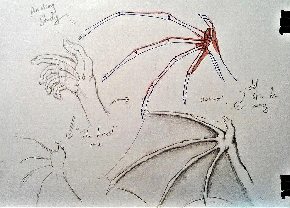 Dragon Wing Anatomy Study - piece 2 by falzelo on deviantART ...