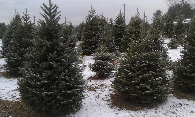 Henry S Tree Farm That Day We Had Snow Tree Farms Air Rhode Island