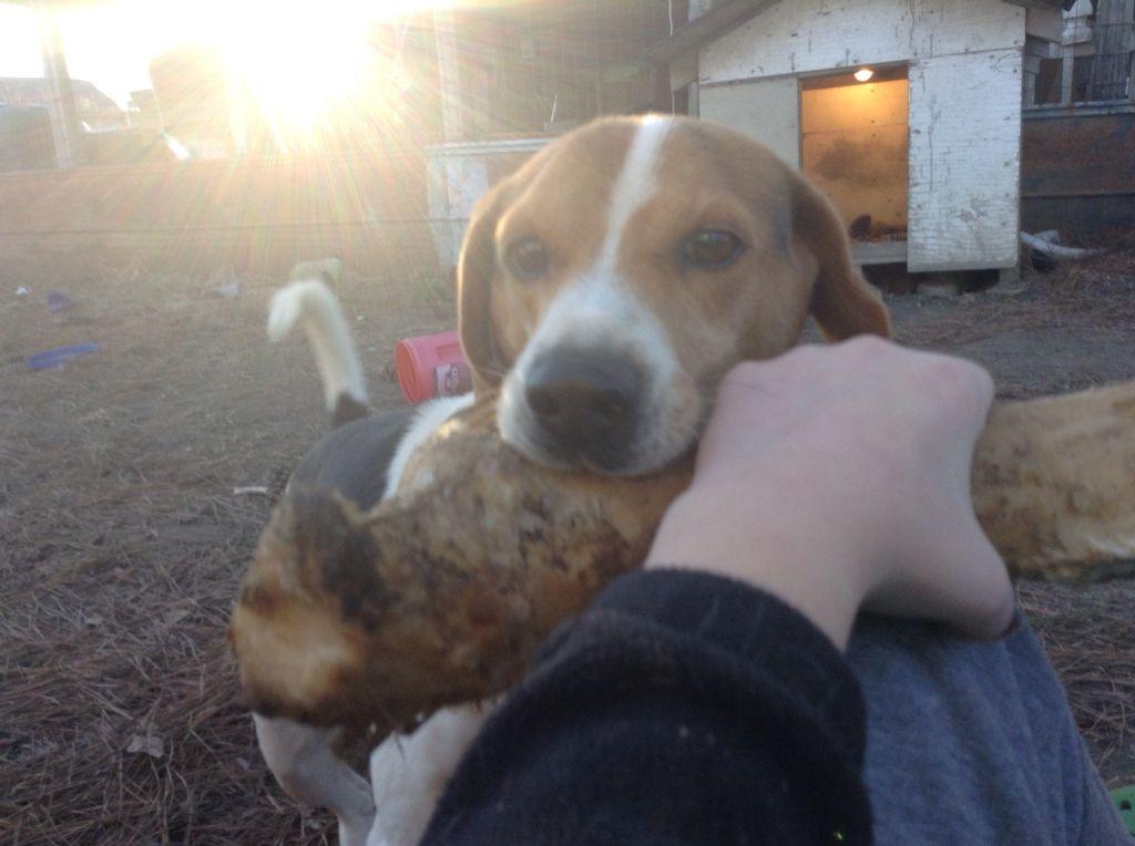 dis is my dog and his big bone he got last xmas