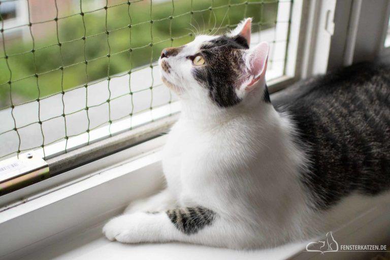 3 Spielzeuge In Unter 5 Minuten Bauen In 2020 Fenstersicherung Fensterschutz Katze Katzen