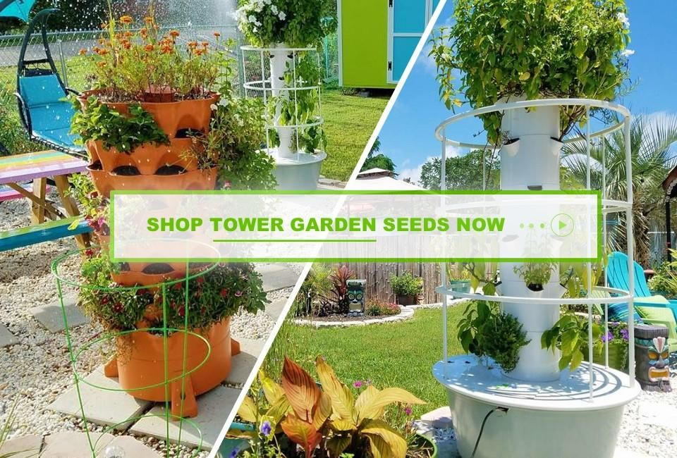 Buy Organic Non Gmo Seeds Online Order Now Garden Seeds Tower