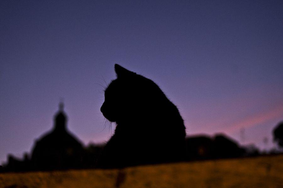 Cat. Rome