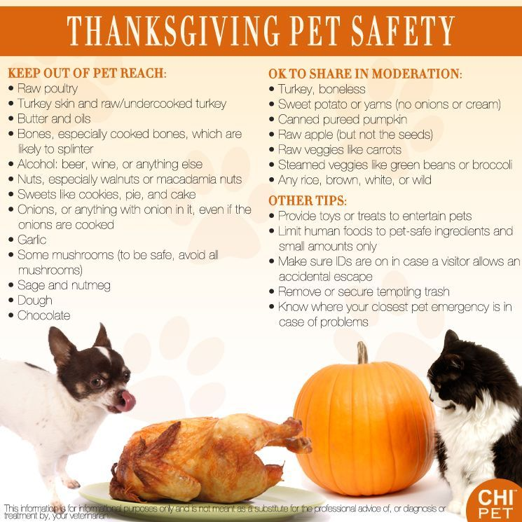 Tips For A Safe Thanksgiving With Pets Pet Hacks Pet Safety