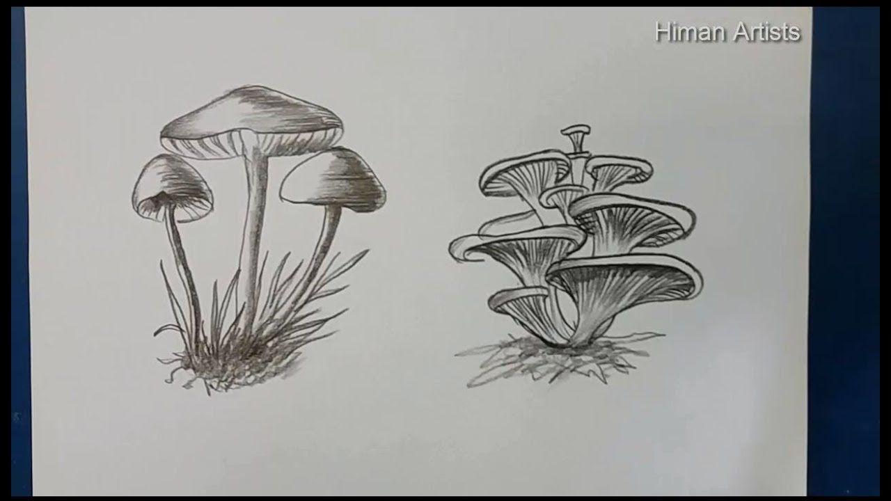 Mushroom Drawing step by step    How to Draw Mushroom two item ...
