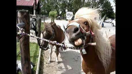 'Simply Magic ' cute name for a cute Shetland pony