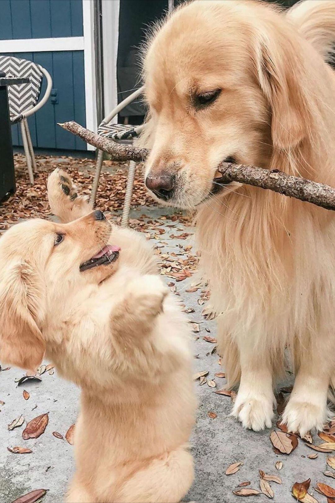 Pin Von Miriam Ars Lupae Nature C Auf Animals Hunde