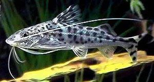 Pin Op Fish Fish Related Things
