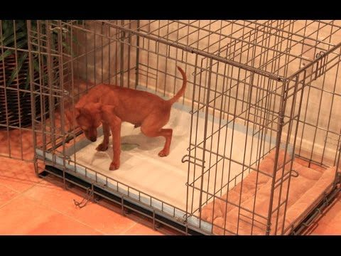 Potty Training Puppy Apartment Full Video How To Train A Fast Easy You