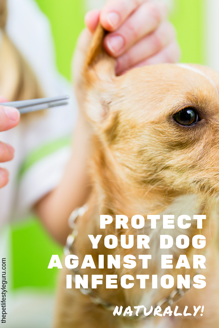 Want to learn how to protect your dog's ears against ear
