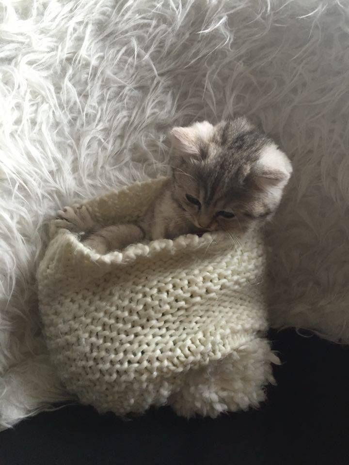 landlikeacat Hey reddit, this is my new kitten, Mimi