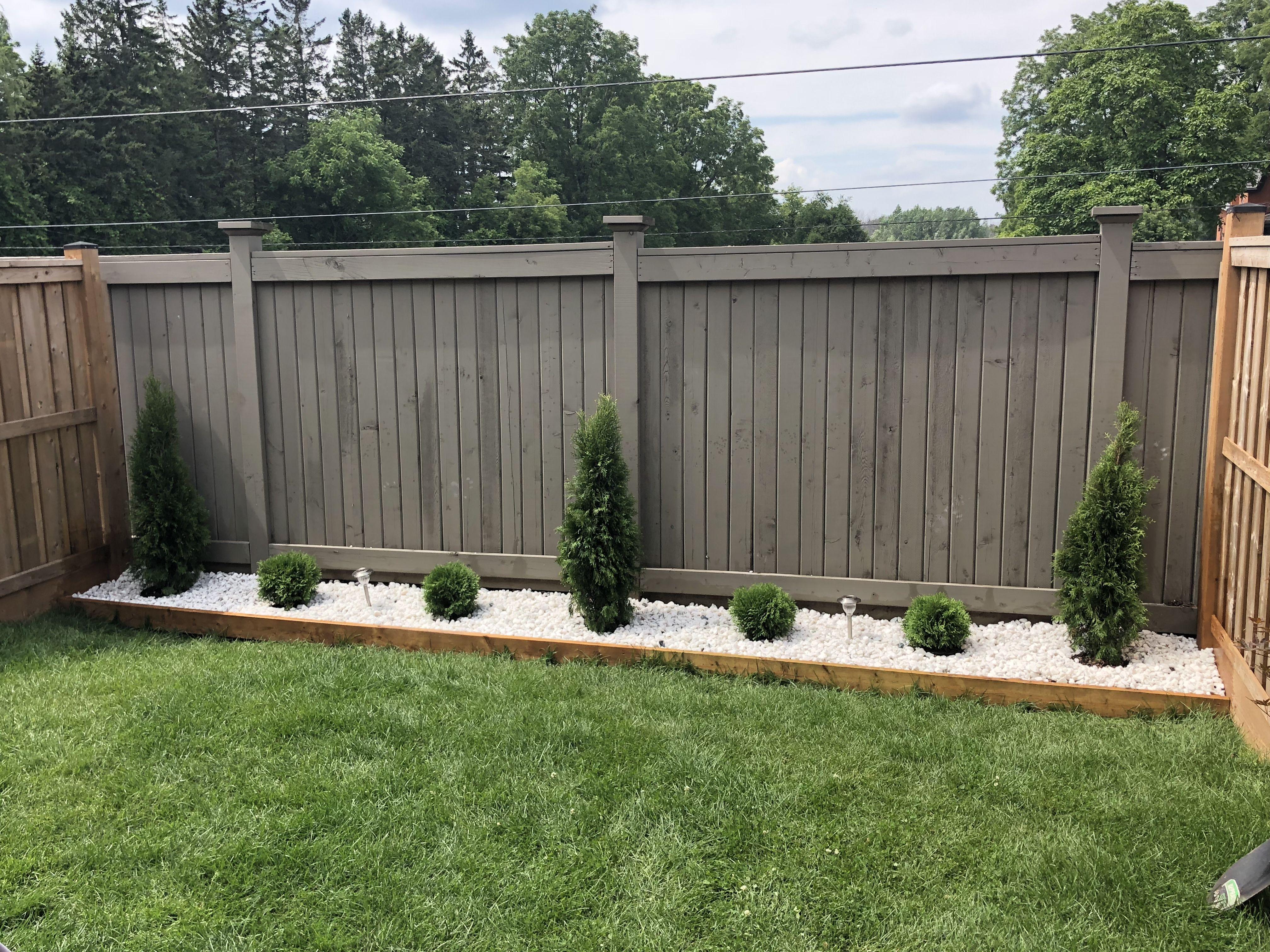 White Stone Garden Along Backyard Fence Little Giant Globe Cedars
