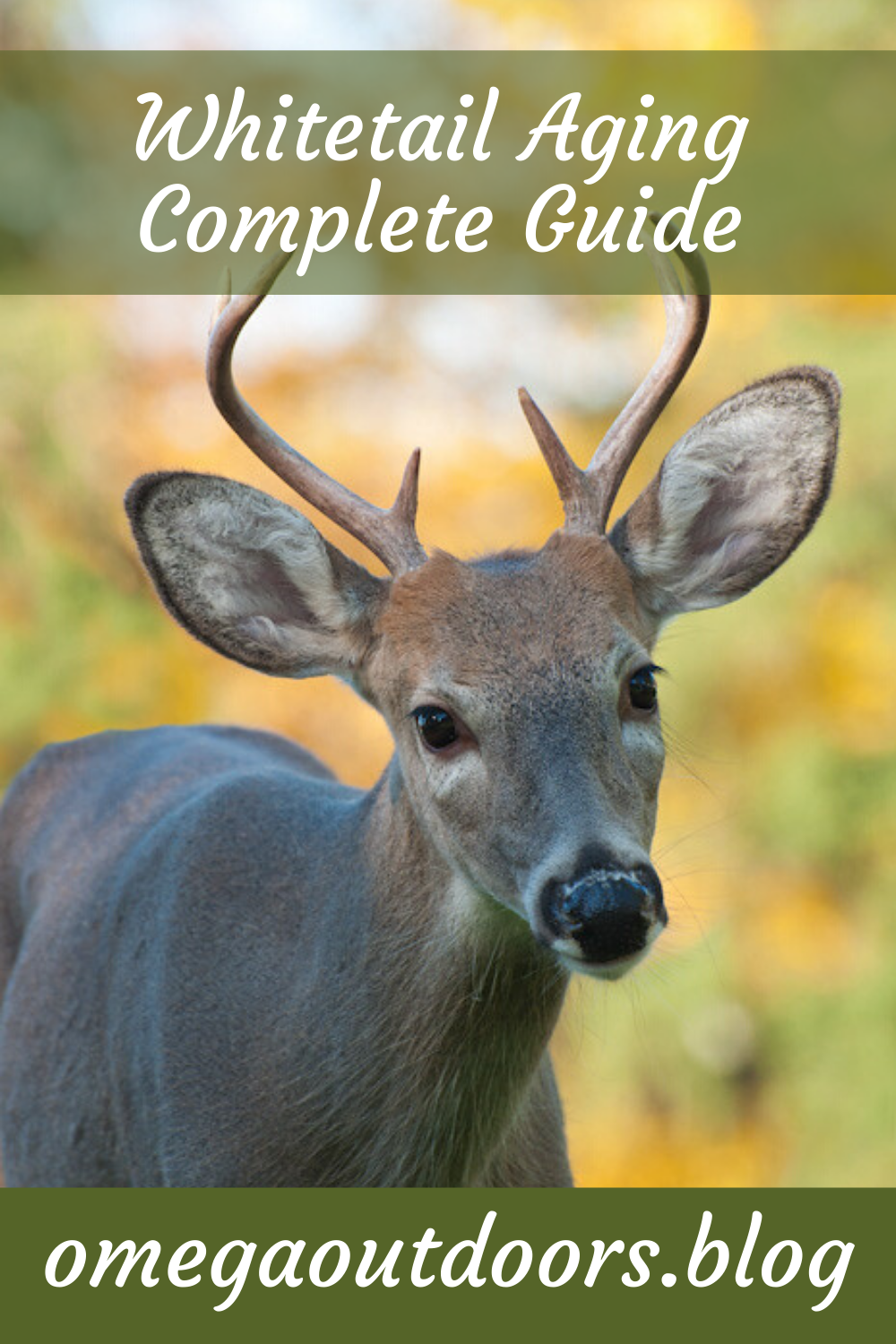 Complete Guide To Aging Whitetail Deer in 2020 Whitetail