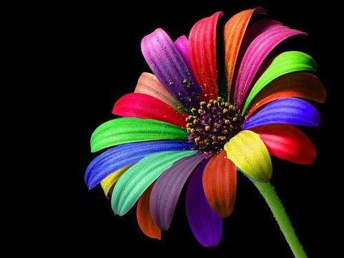 Past Experiences Baggage Rainbow Flowers Rainbow Wallpaper