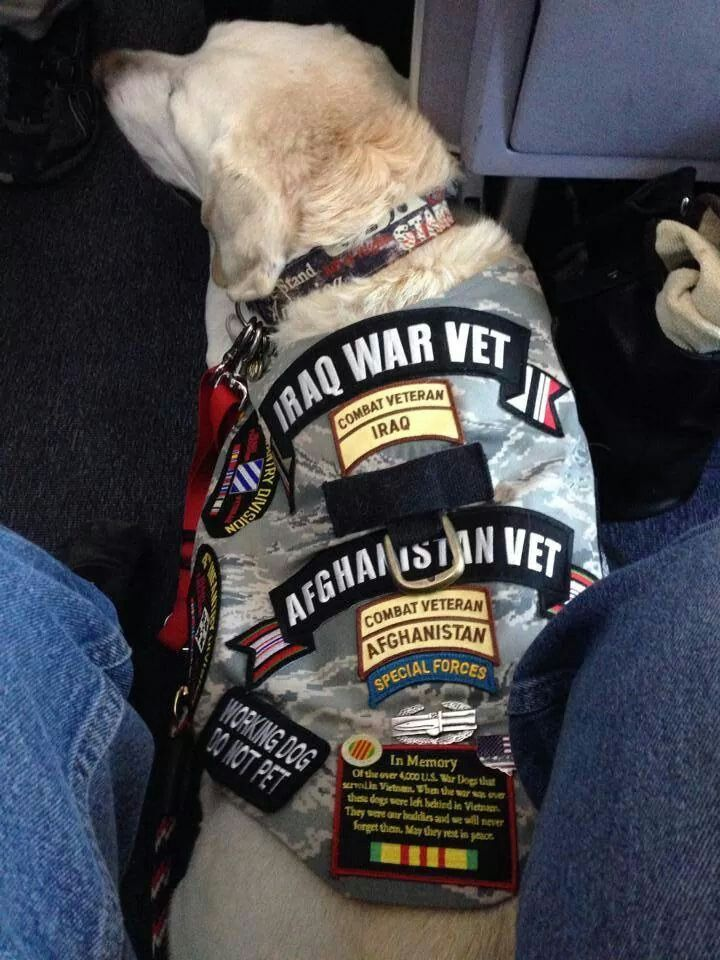 Service Dog For Veterans Of Wars And Conflicts Military Dogs