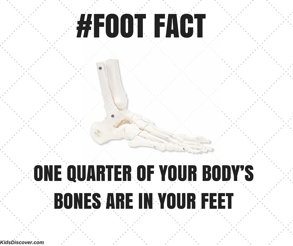 """Your feet are your foundation"" #science #FootFactFriday"