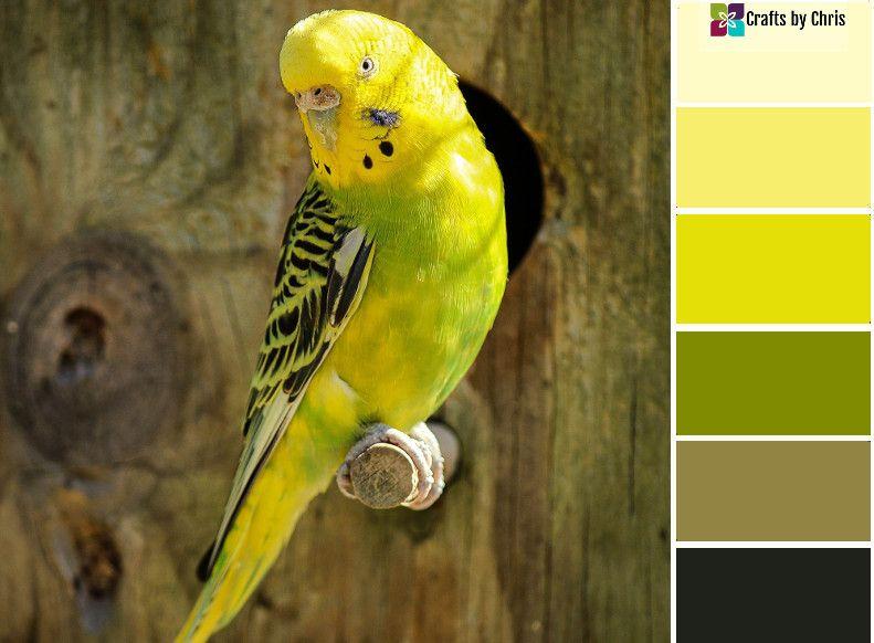 Monday Motivation Color Palette 135 Pet Birds Vintage Bird Cage Yellow Parakeet