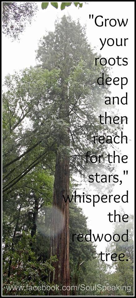 Like Trees Grow Together: A Spiritual Journey