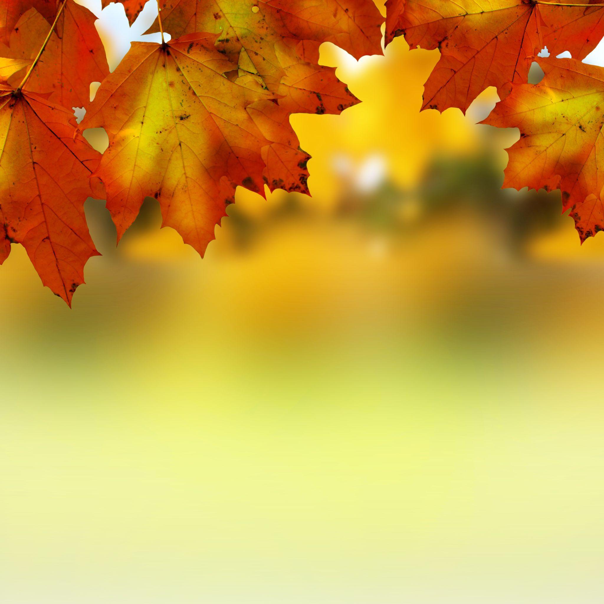 Autumn Leaves Sky September October November Bye Summer Wallpaper Wallpapers
