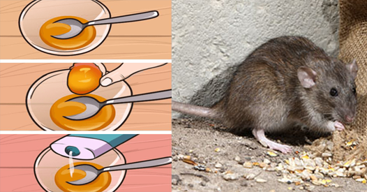 Some Easy Ways To Get Rid Of Rats And Mice Permanently And Keep Them Away Of Your House Getting Rid Of Rats Animals For Kids Mice Infestation
