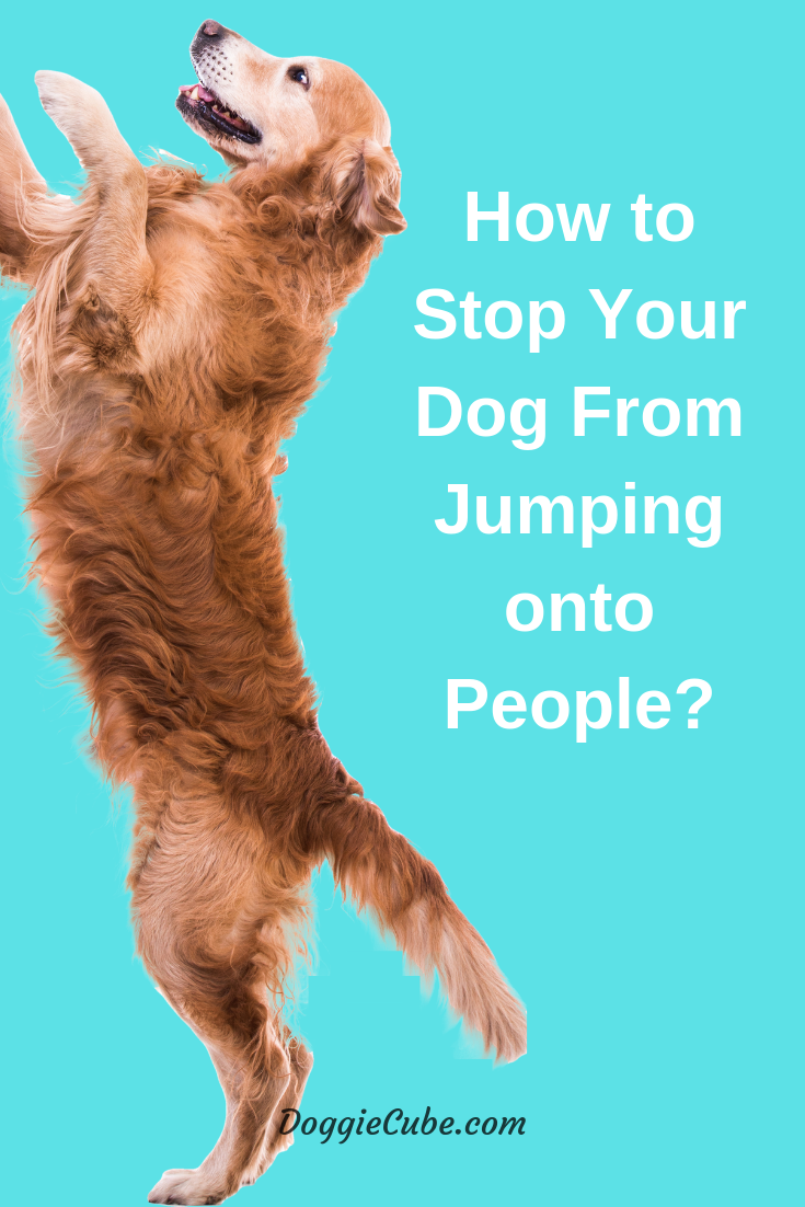 How To Stop Your Dog From Jumping Onto People in 2020