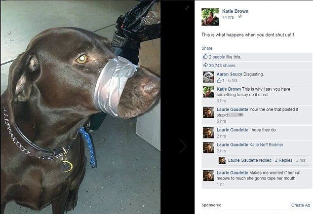 Woman Who Posted Photos Of Her Dogs DuctTaped Muzzle