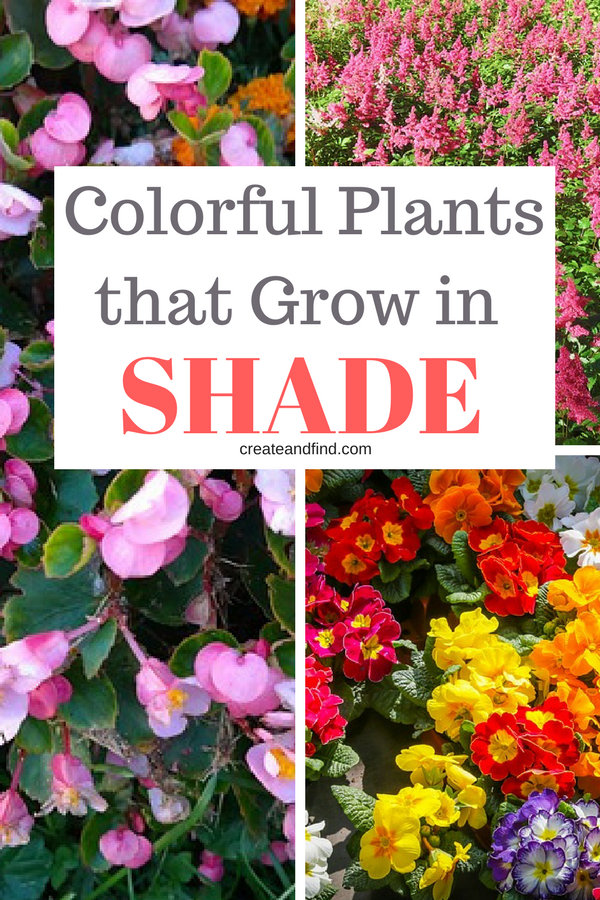 The 10 Best Plants That Grow In Shade Plants That Love Shade