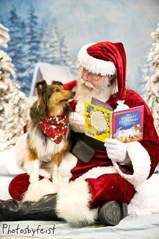 Merry Christmas from Sheltie Lovers
