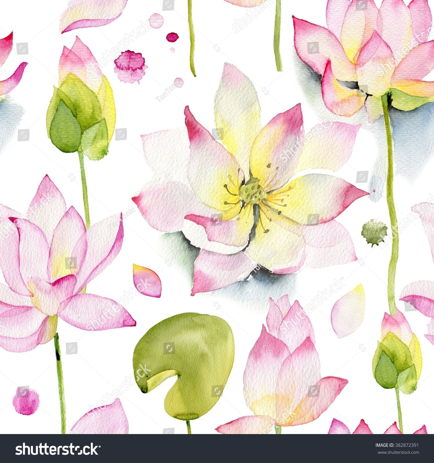 Lilies And Lotuses On A White Background Pink Lotus Flowers