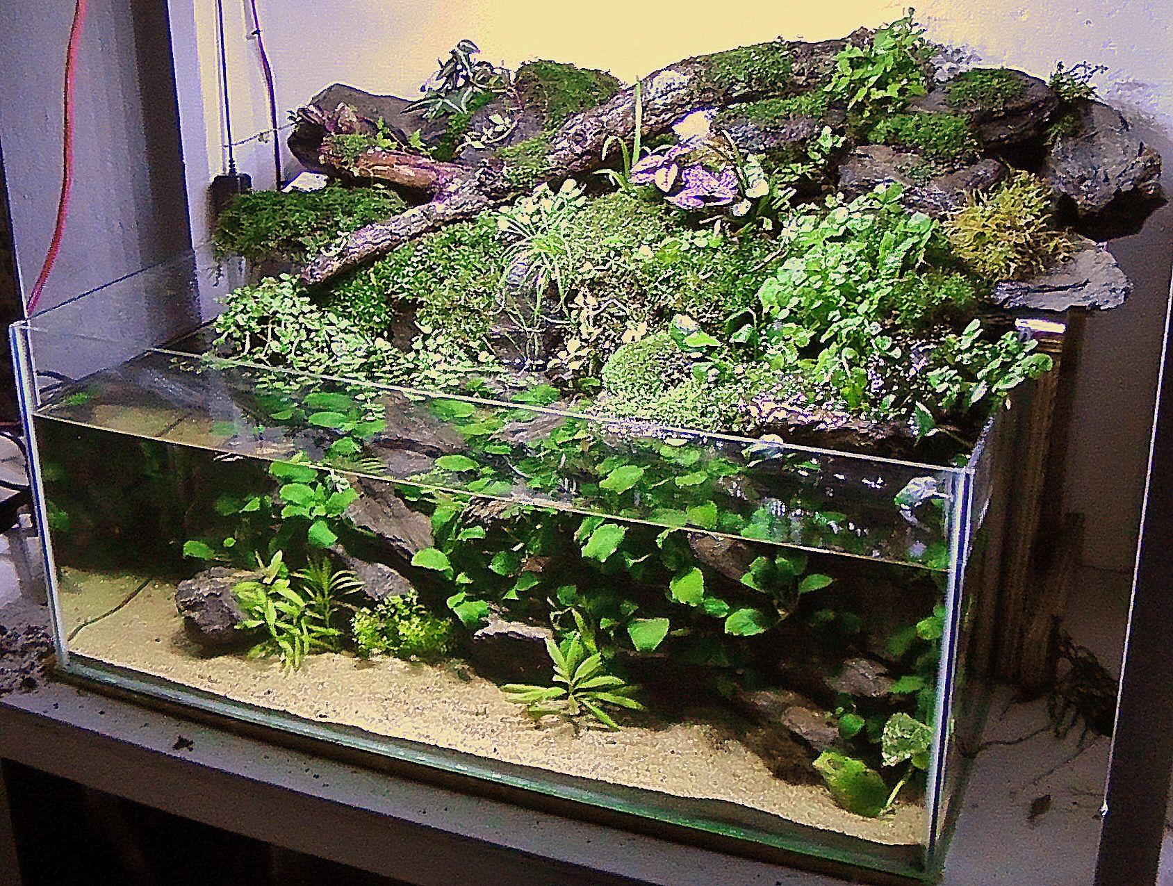 20 Gallon Rimless Mish Mash.paludarium - Planted Tank Forum Paludarium Water
