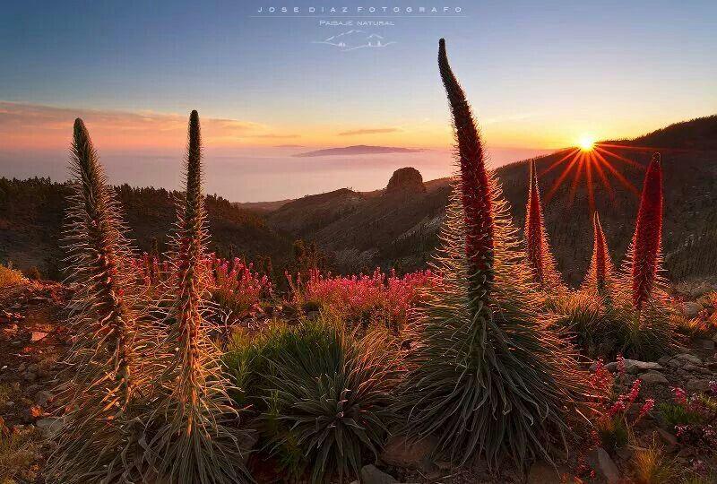 Psrque nacional del Teide. Islas Canarias