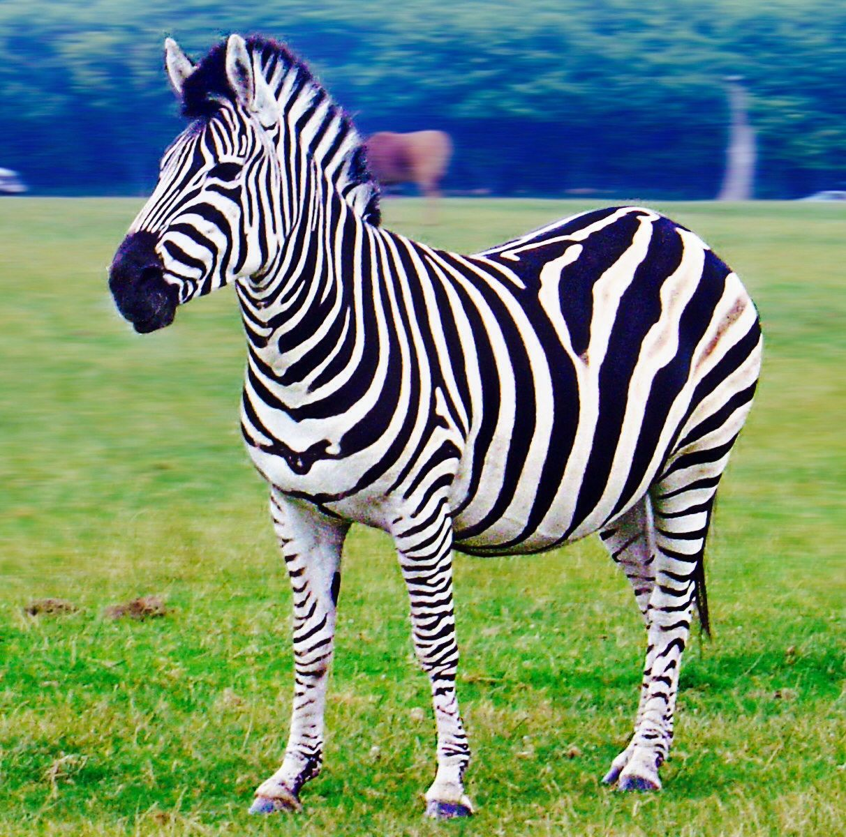 There are three different species of Zebra that are found