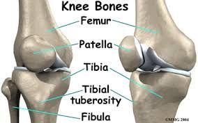 Afbeeldingsresultaat voor lower leg anatomy