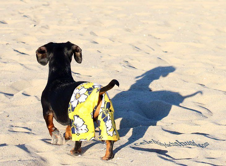Book Tour Part 2 My L A Story Crusoe The Celebrity Dachshund