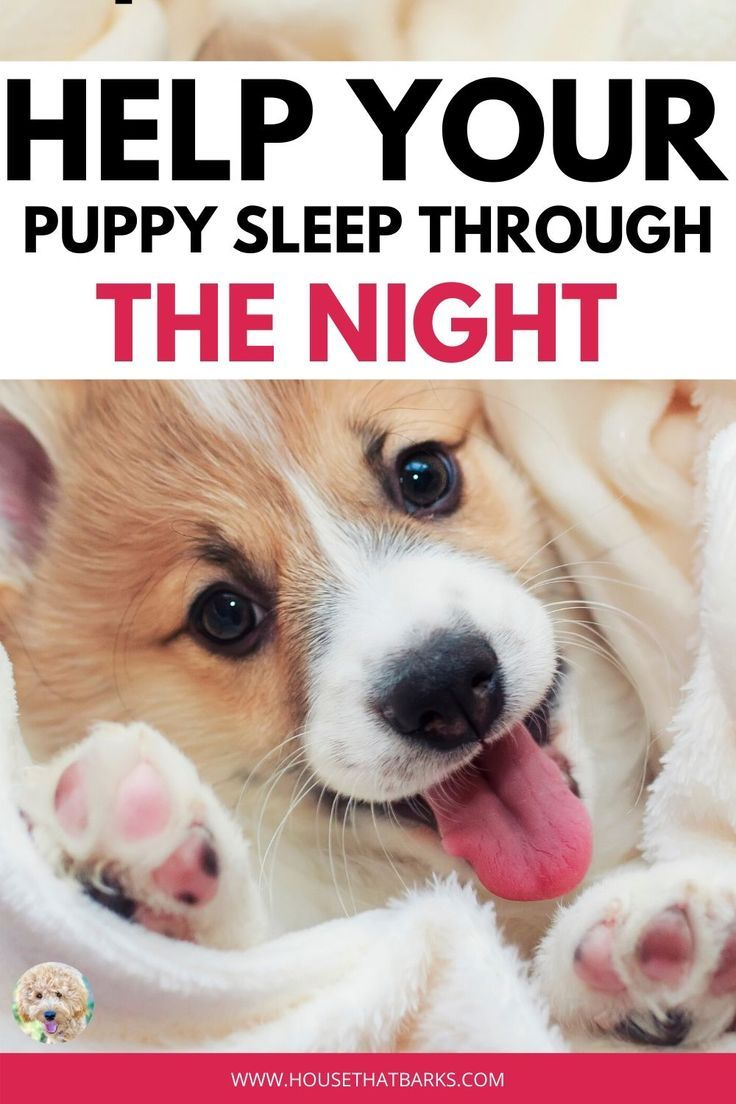 Helping Your Puppy Sleep Through The Night Puppy Sleeping