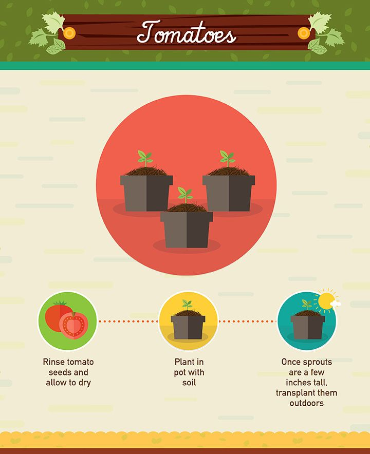 Infographic: 19 Foods You Can Regrow from Scraps #tomatenzüchten