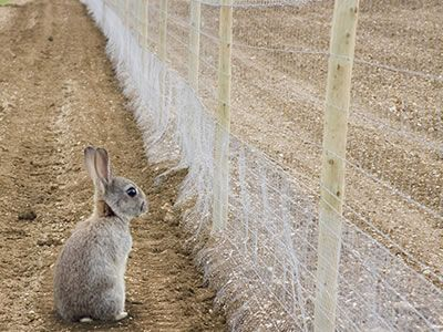 A rabbit outside the rabbit wire fence watches the farm. | Hexagonal ...
