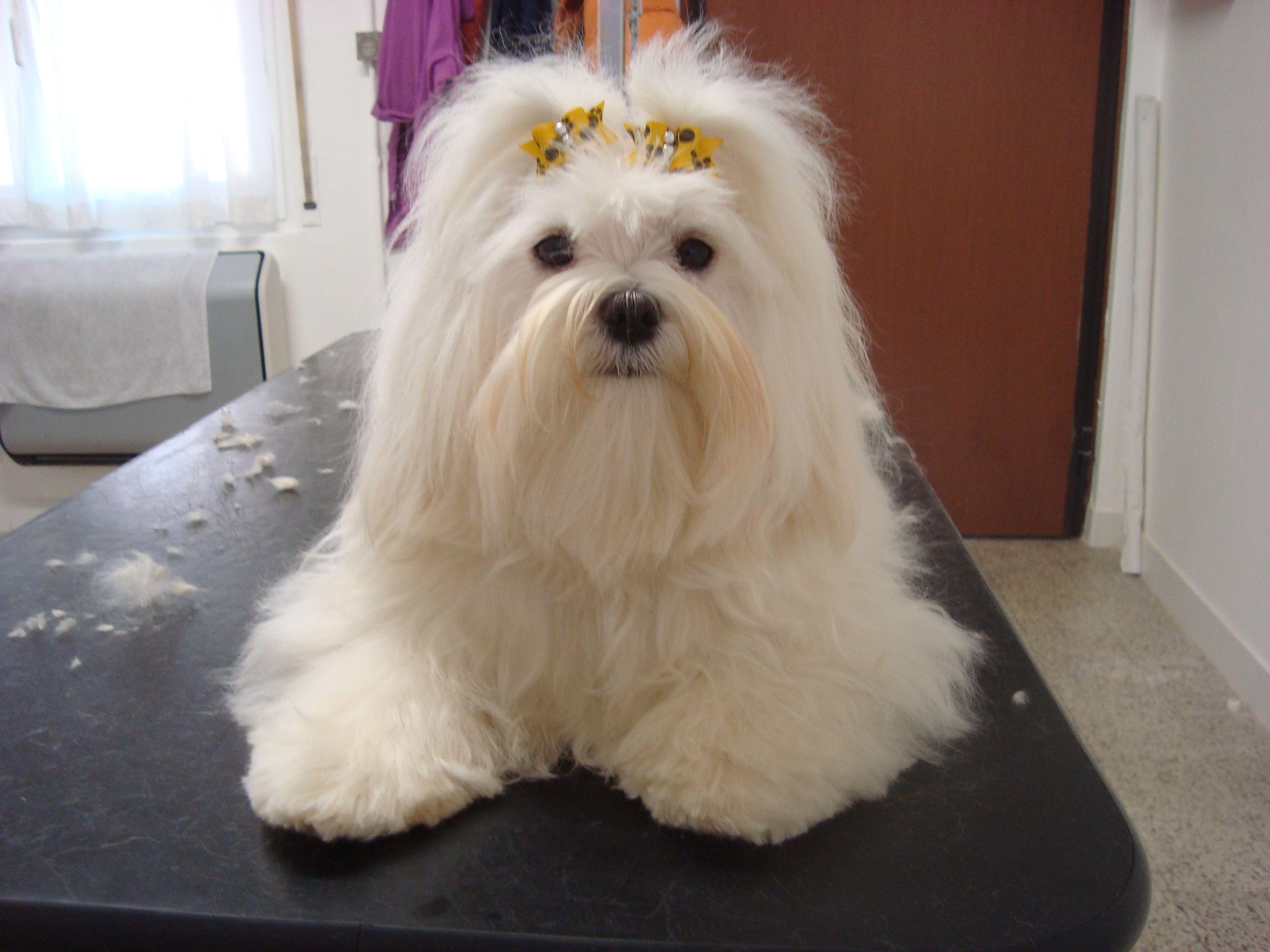 Attrezzatura Toelettatura ~ Fashion dog fashion dog toelettatura professionale san nicolò
