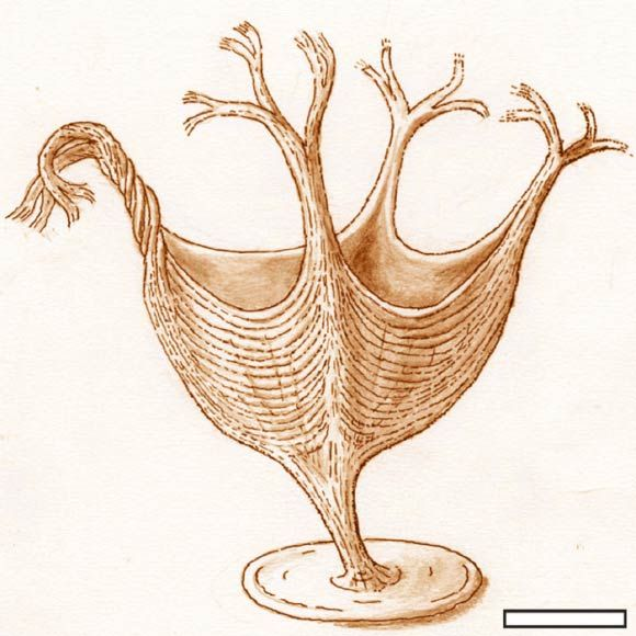 560 million-year old fossil provides earliest evidence of muscles. (Biology Pop)