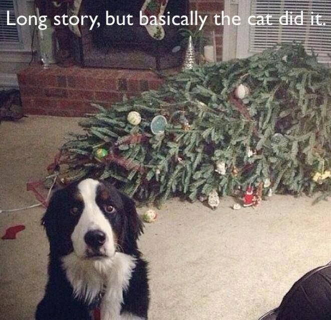 Long story short..basically the cat did it..