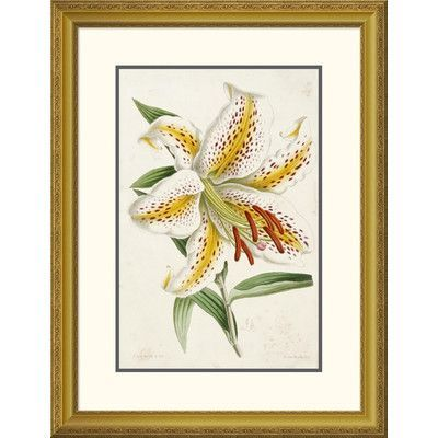 Global Gallery \'Lily\' by James Andrews Framed Graphic Art Size ...