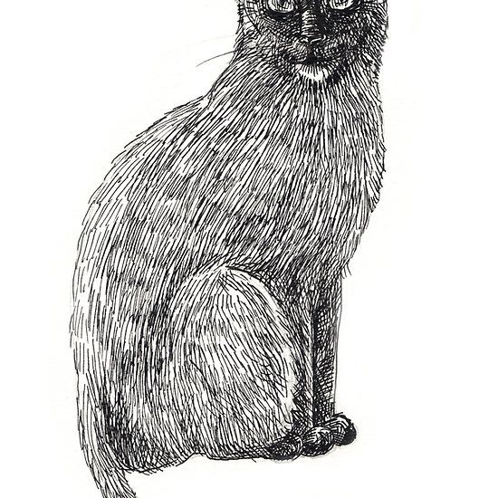 Ink drawing of black cat