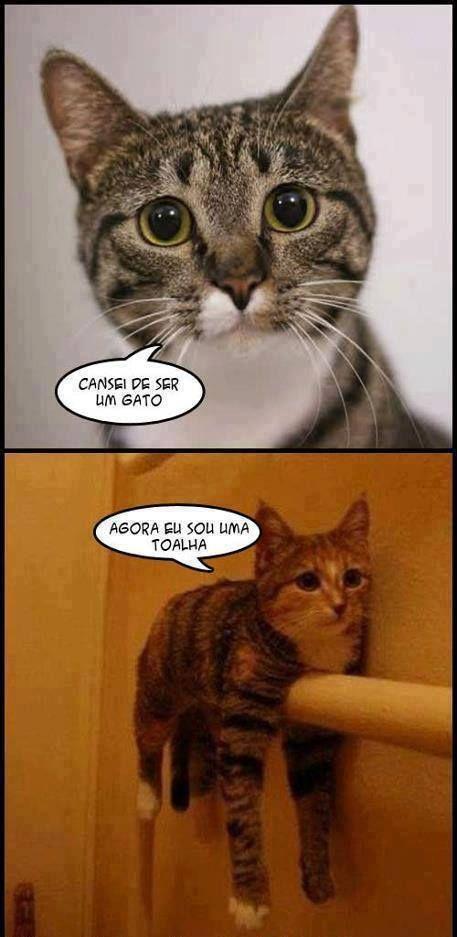 Pin De Julieta Martinez Em Chistes Memes De Gatos Memes