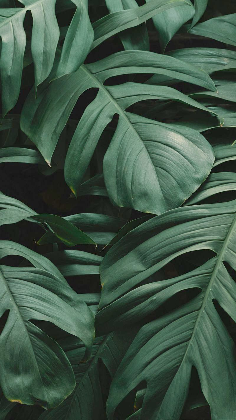 Wallpaper Iphone 8 Plus Bmw Or Gadgets Elderly Via Gadgets Technology Meaning Per Christmas Wal Iphone Wallpaper Plants Plant Wallpaper Leaves Wallpaper Iphone
