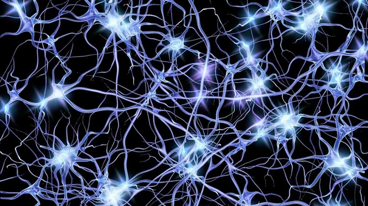 Características de las neuronas Cuál es la más larga?