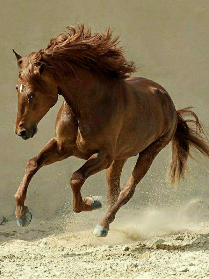 бегать как лошадь картинки