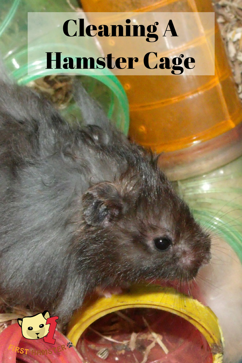 Cleaning A Hamster Cage How Often And How To Do It Right
